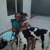 Pet sitter for two great danes